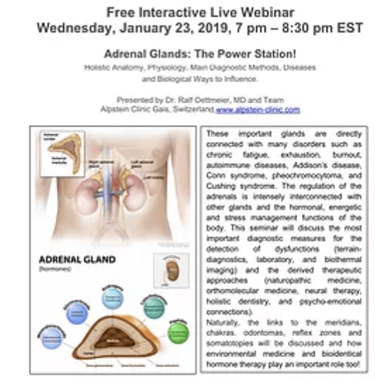 Jan. 23: the Adrenal Glands – the Power Station!