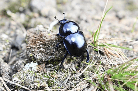 Lesson of the Dung Beetle
