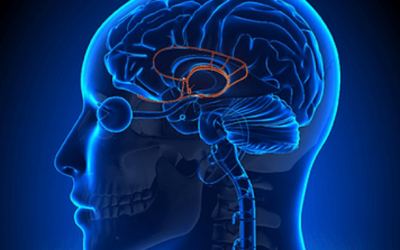 Is a Limbic System Impairment Hijacking Your Health?