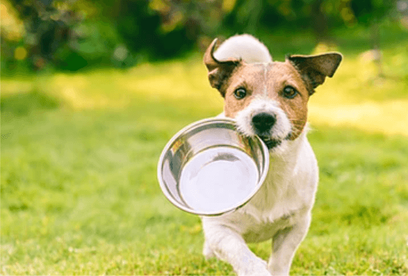 Restoring a Canine's Intestinal Microbiome