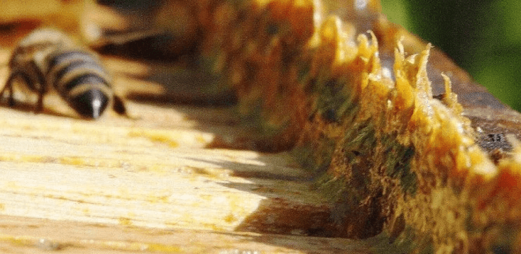 Propolis – Medicine from the Hive