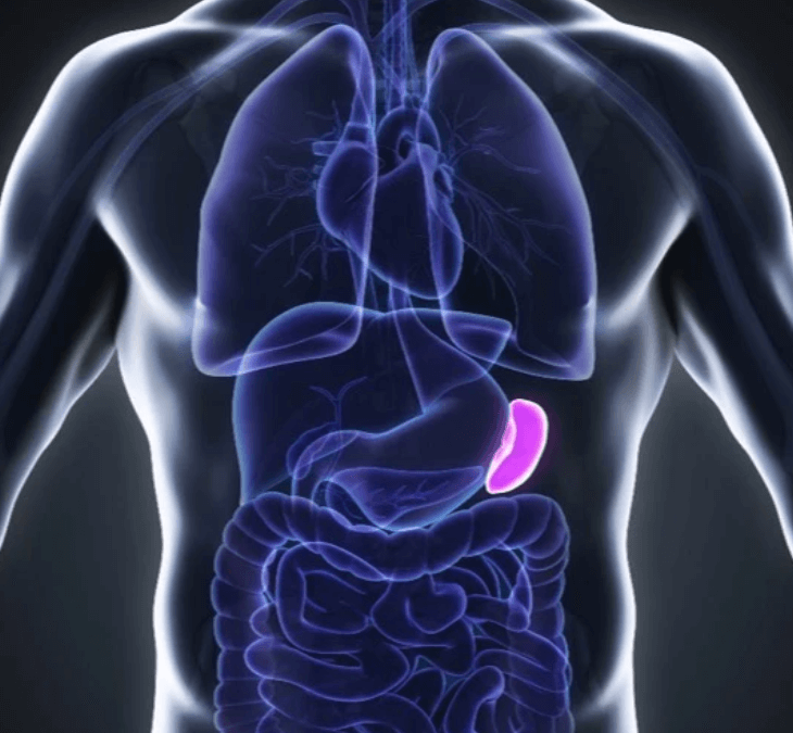 The Forgotten Organ: the Spleen and Spleen Peptide Therapy